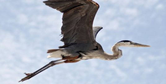 Your Power, Uniqueness and the Heron