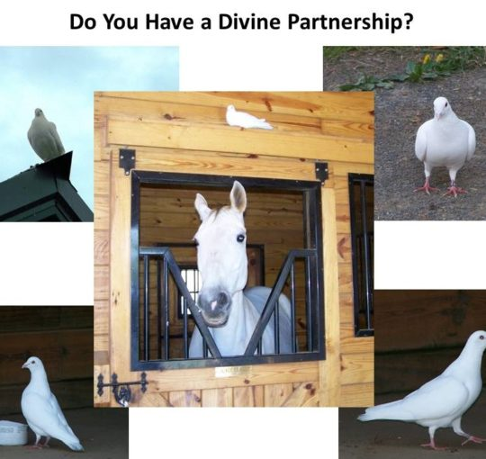 Do You Have a Divine Partnership?